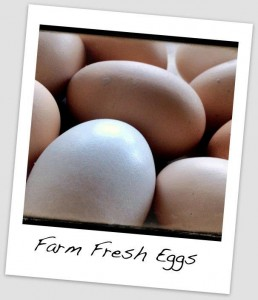 Eggs from Hidden Fortress Farm